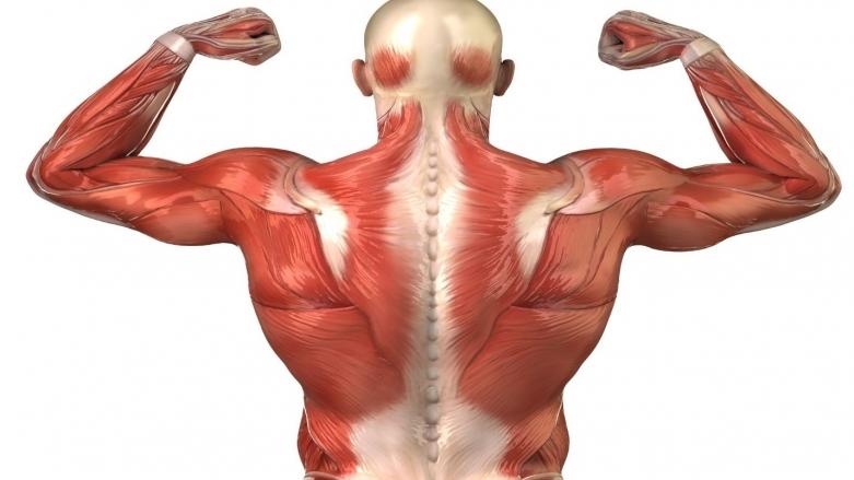 گلوتامین چه طور به عضلهسازی کمک میکند؟